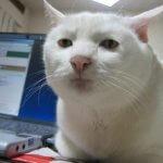 Кот из МФПУ Синергия